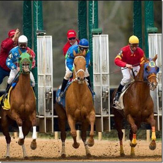 the australian horse race 2013 melbourne cup