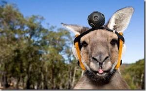Google new Skippy (kangaroo)cam