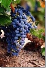 seo news grape vine